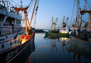 Nederlandse visserij / foto: Corey Arnold